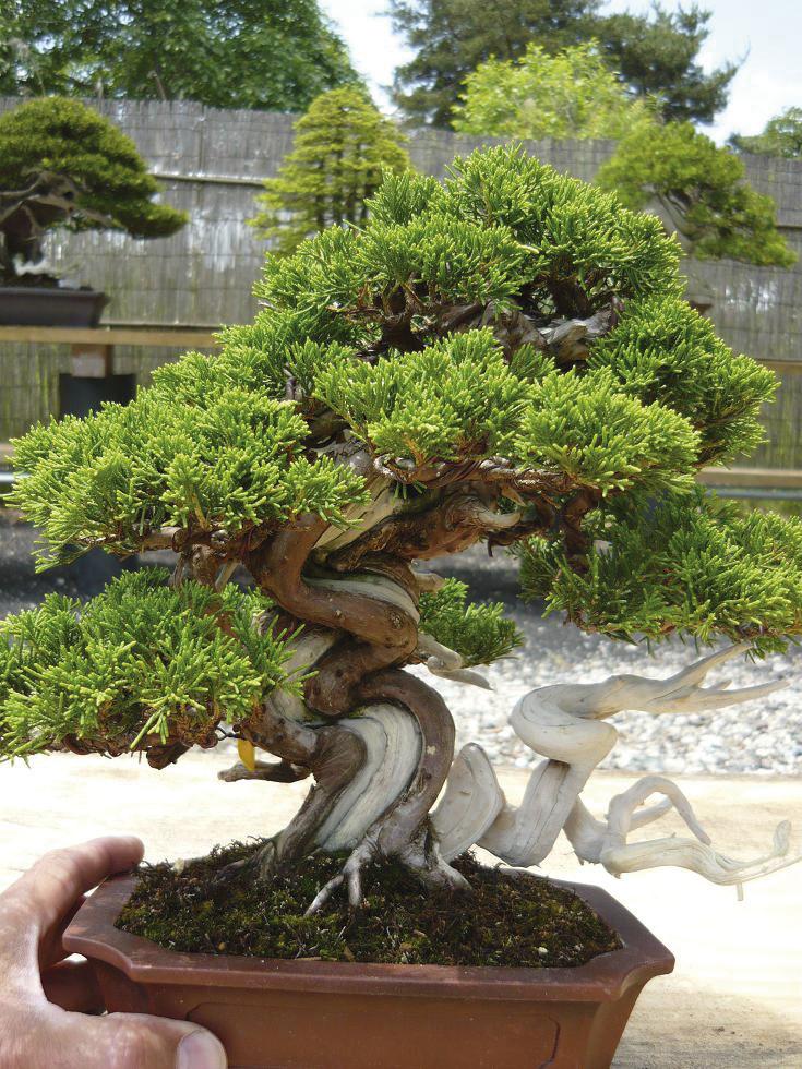 bonsai diebstahl die datenbank im www. Black Bedroom Furniture Sets. Home Design Ideas